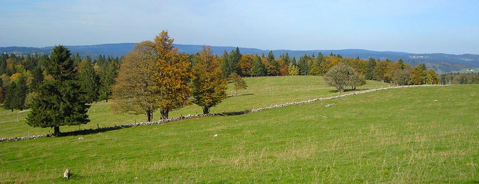 L'Auberson automne
